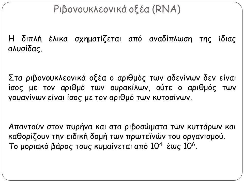 Ριβονουκλεονικά οξέα (RNA)