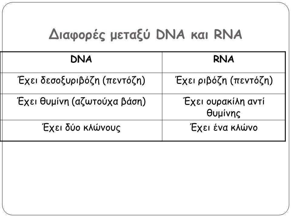 Διαφορές μεταξύ DNA και RNA