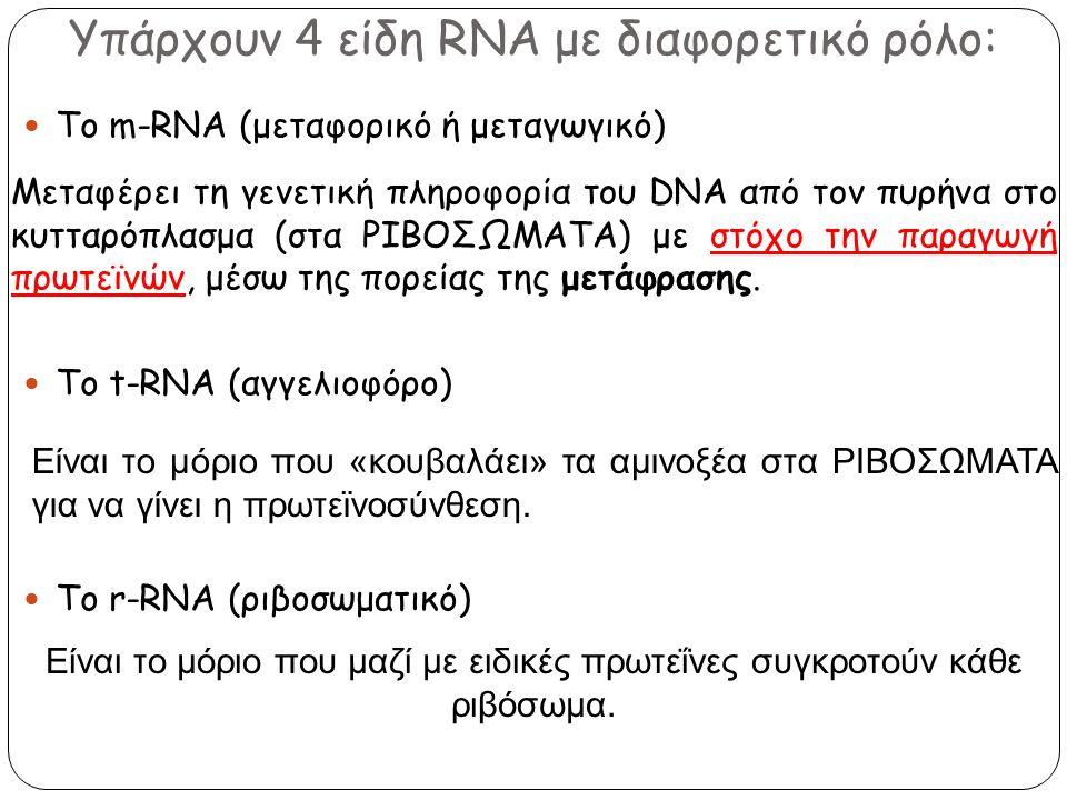 Υπάρχουν 4 είδη RNA με διαφορετικό ρόλο: