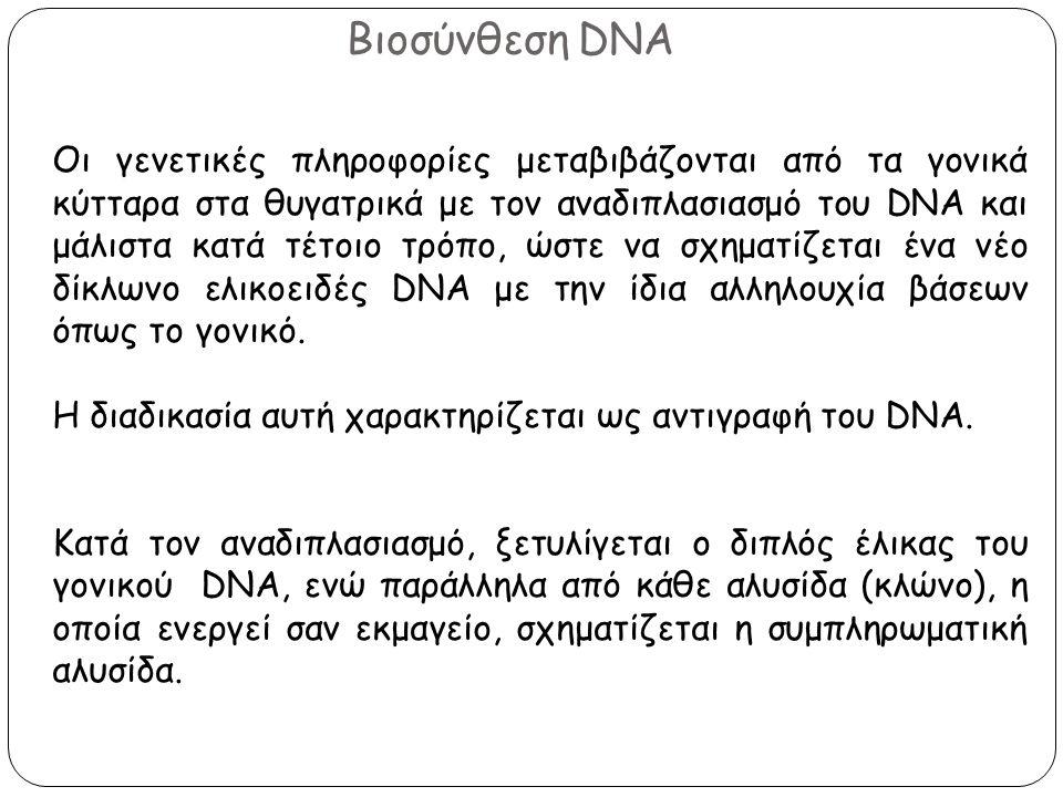 Βιοσύνθεση DNA