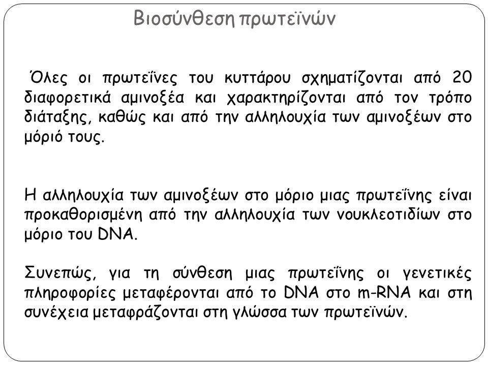 Βιοσύνθεση πρωτεϊνών