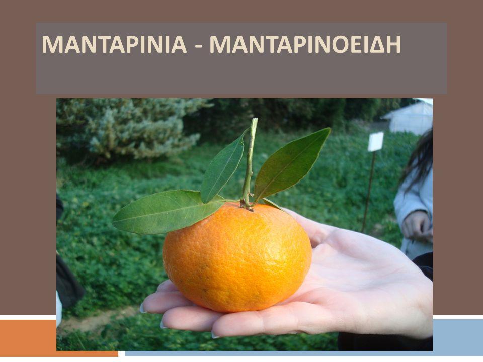 ΜΑΝΤΑΡΙΝΙΑ - ΜΑΝΤΑΡΙΝΟΕΙΔΗ
