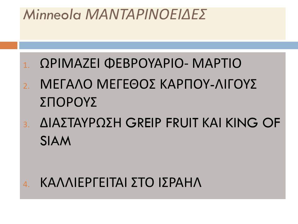 Minneola ΜΑΝΤΑΡΙΝΟΕΙΔΕΣ