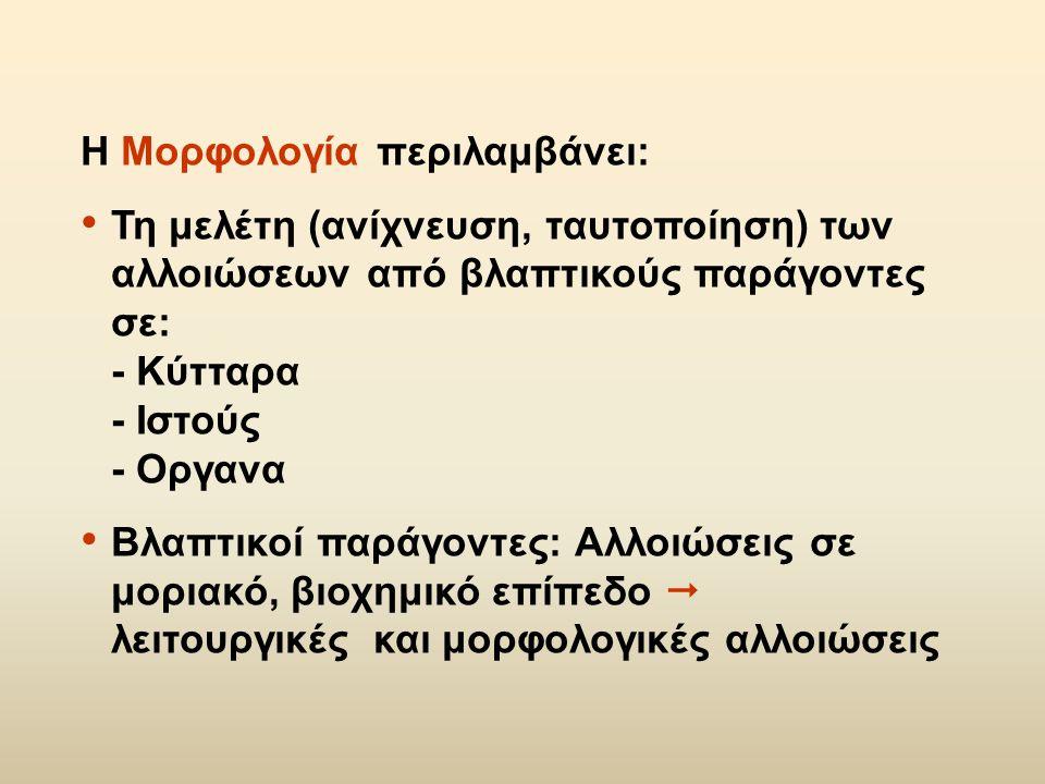 Η Μορφολογία περιλαμβάνει: