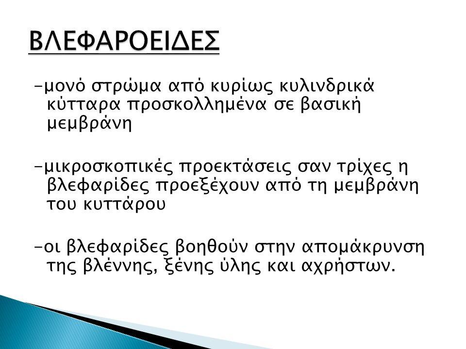 ΒΛΕΦΑΡΟΕΙΔΕΣ