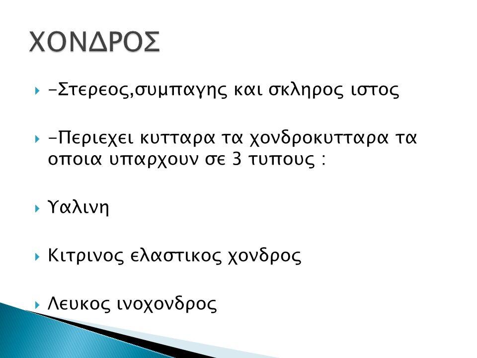 ΧΟΝΔΡΟΣ -Στερεος,συμπαγης και σκληρος ιστος