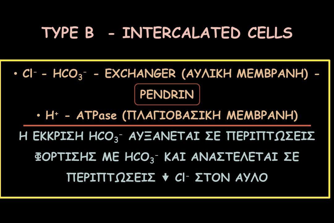 ΤΥPE Β - INTERCALATED CELLS