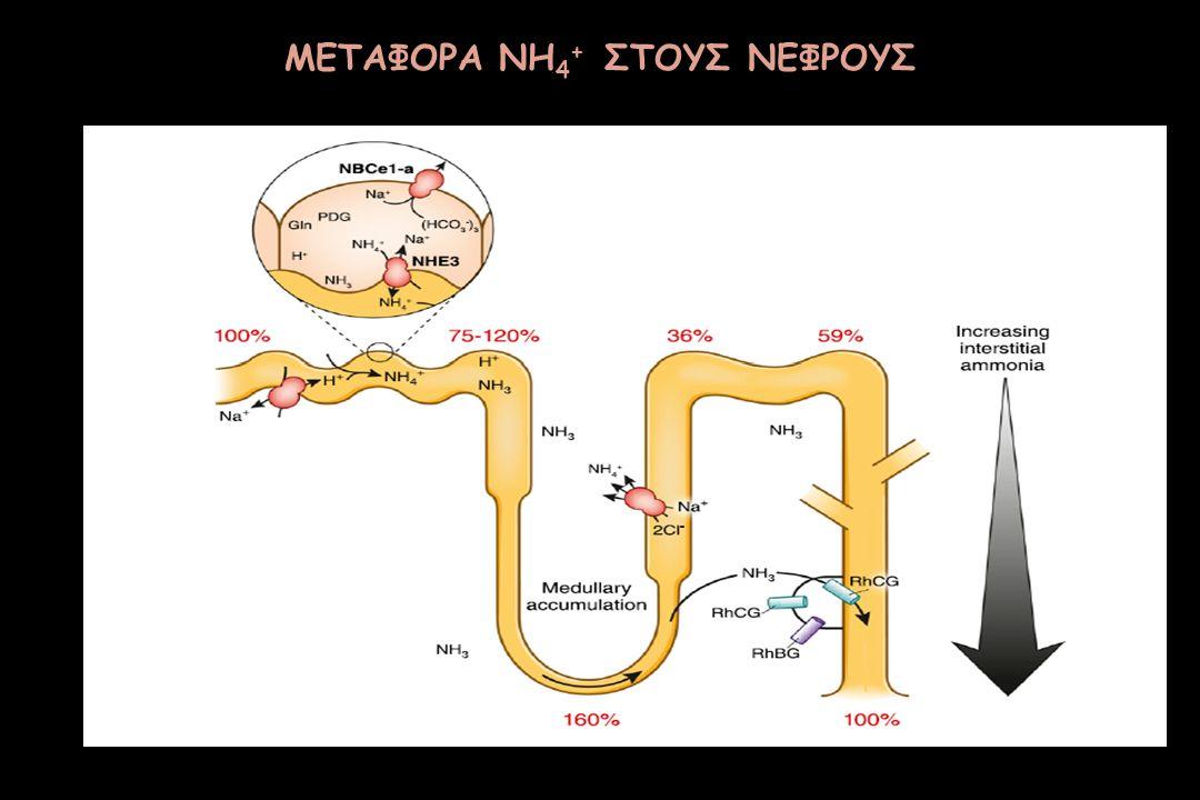 ΜΕΤΑΦΟΡΑ NH4+ ΣΤΟΥΣ ΝΕΦΡΟΥΣ
