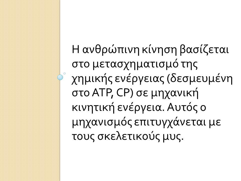 Η ανθρώπινη κίνηση βασίζεται στο μετασχηματισμό της χημικής ενέργειας (δεσμευμένη στο ATP, CP) σε μηχανική κινητική ενέργεια.