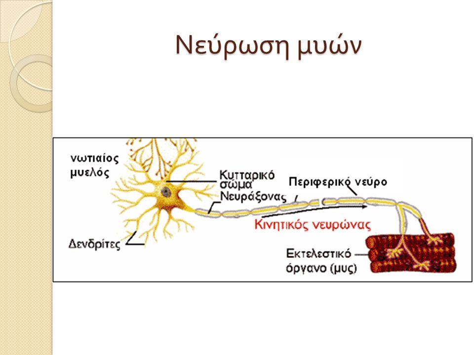 Νεύρωση μυών