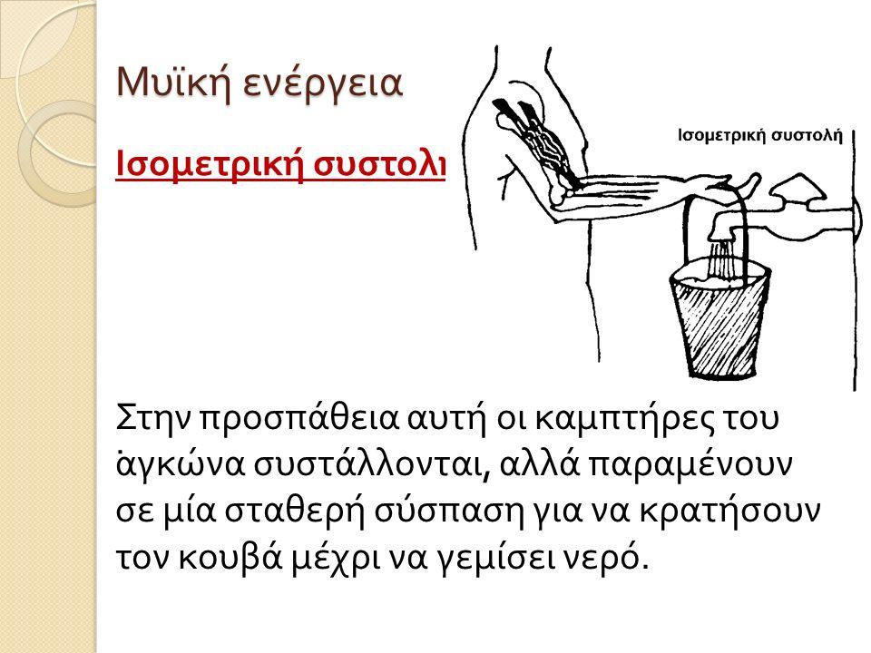 Μυϊκή ενέργεια Ισομετρική συστολή .