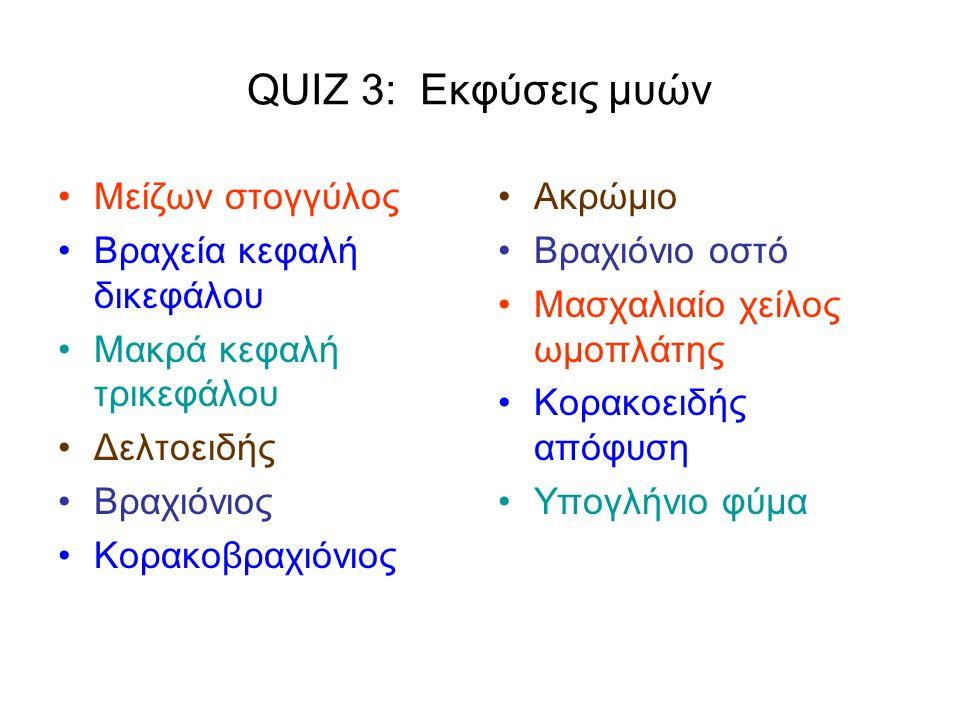 QUIZ 3: Εκφύσεις μυών Μείζων στογγύλος Βραχεία κεφαλή δικεφάλου