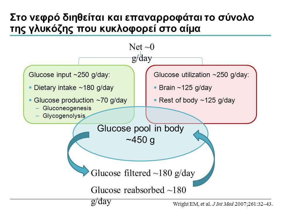 Στο νεφρό διηθείται και επαναρροφάται το σύνολο της γλυκόζης που κυκλοφορεί στο αίμα