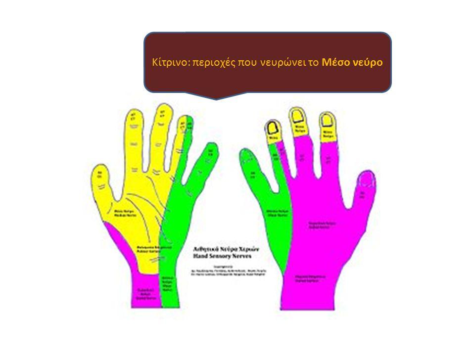 Κίτρινο: περιοχές που νευρώνει το Μέσο νεύρο