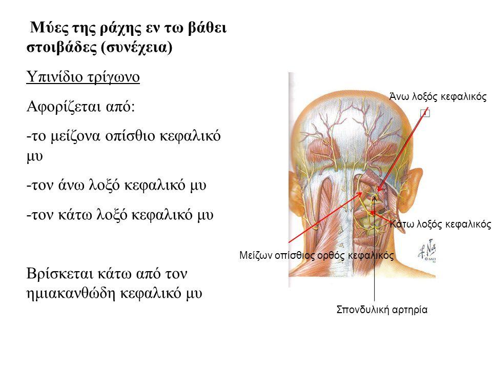 -το μείζονα οπίσθιο κεφαλικό μυ