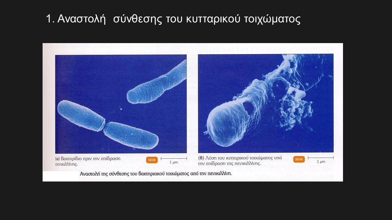 1. Αναστολή σύνθεσης του κυτταρικού τοιχώματος