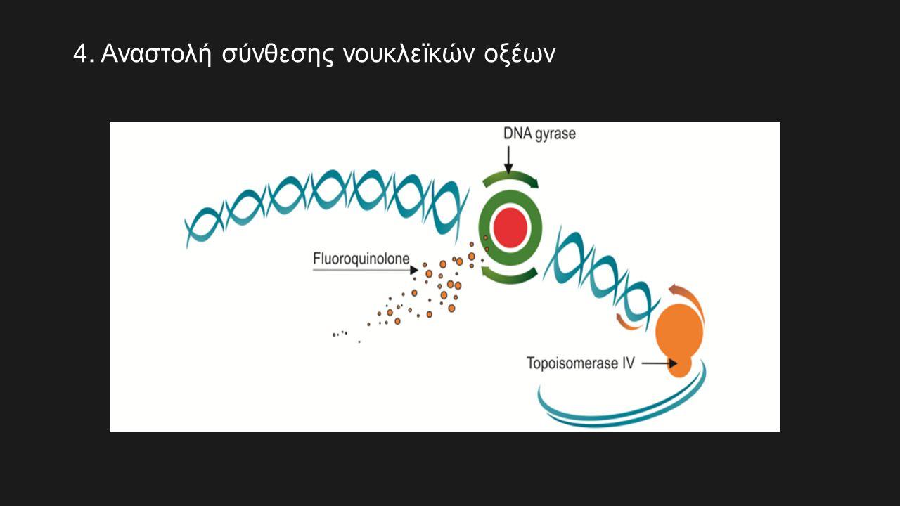 4. Αναστολή σύνθεσης νουκλεïκών οξέων