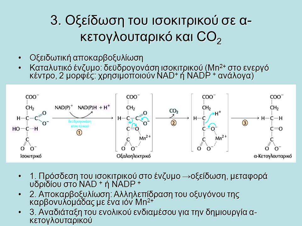 3. Οξείδωση του ισοκιτρικού σε α-κετογλουταρικό και CO2