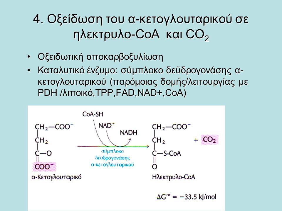 4. Οξείδωση του α-κετογλουταρικού σε ηλεκτρυλο-CoA και CO2