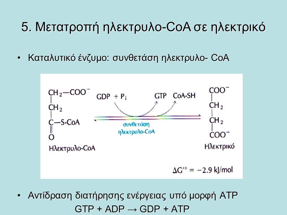 5. Μετατροπή ηλεκτρυλο-CoA σε ηλεκτρικό