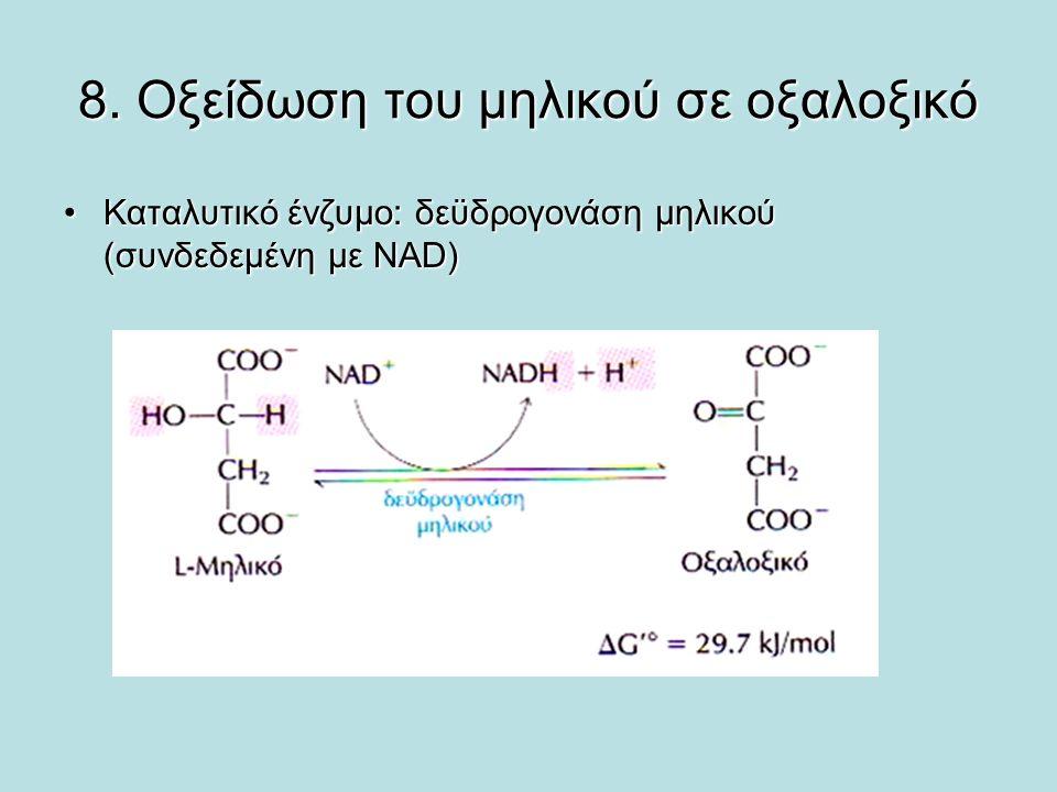 8. Οξείδωση του μηλικού σε οξαλοξικό