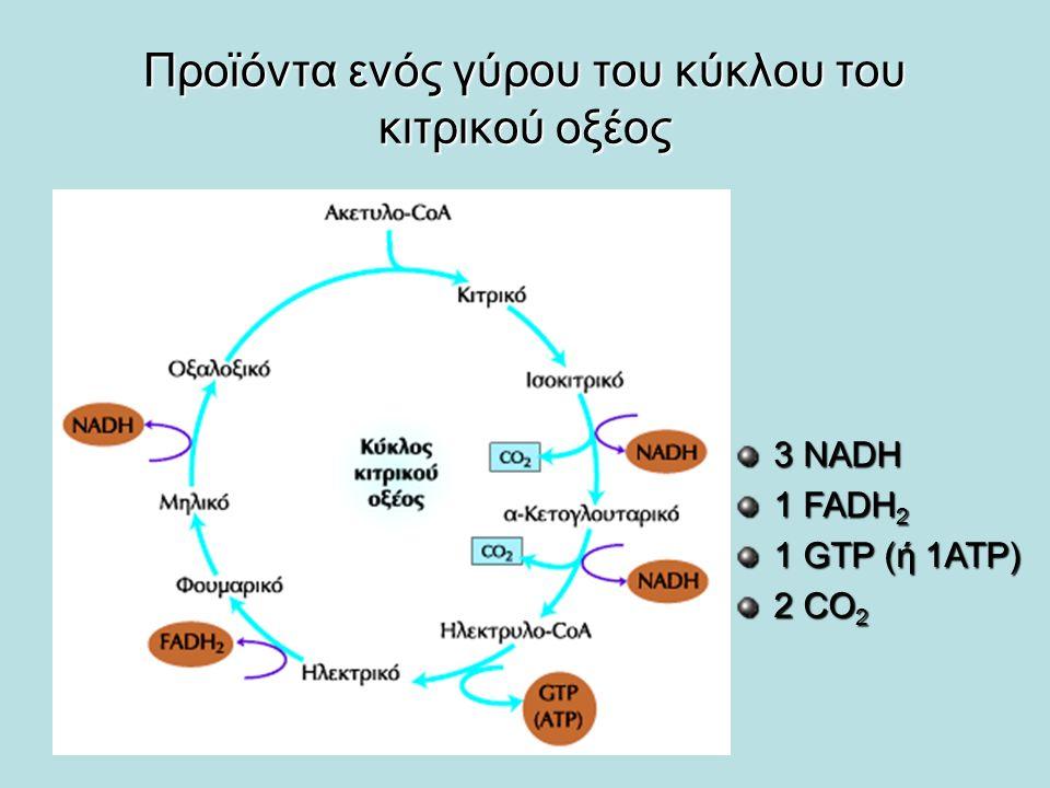 Προϊόντα ενός γύρου του κύκλου του κιτρικού οξέος