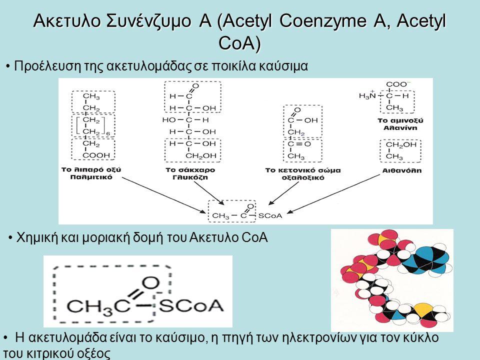 Ακετυλο Συνένζυμο Α (Acetyl Coenzyme A, Acetyl CoA)
