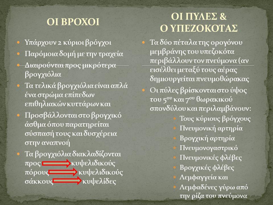 ΟΙ ΒΡΟΧΟΙ ΟΙ ΠΥΛΕΣ & Ο ΥΠΕΖΟΚΟΤΑΣ