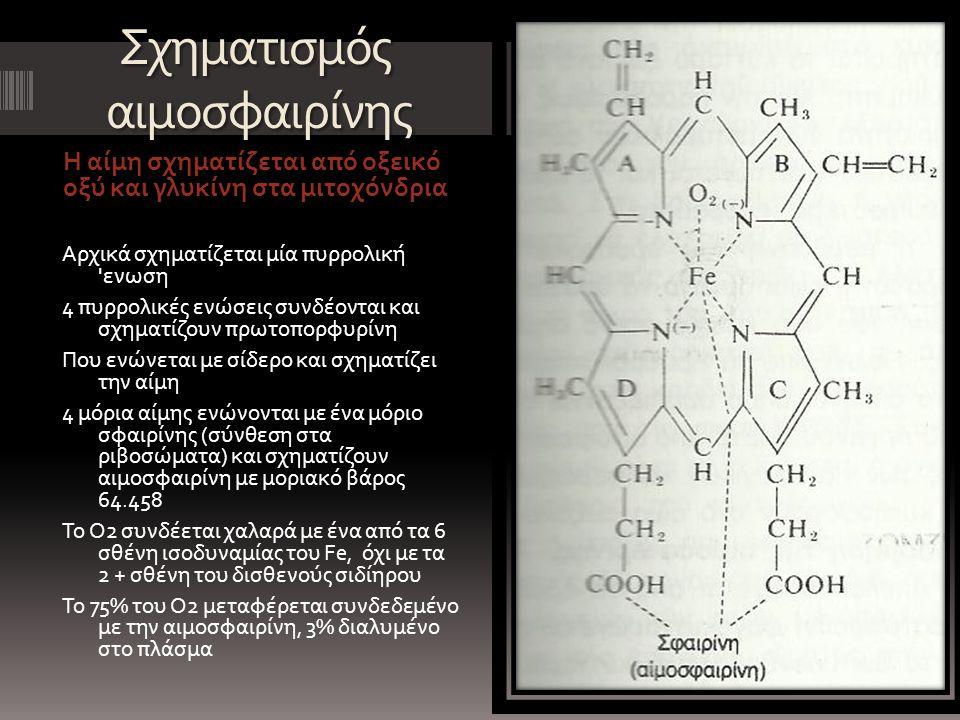 Σχηματισμός αιμοσφαιρίνης