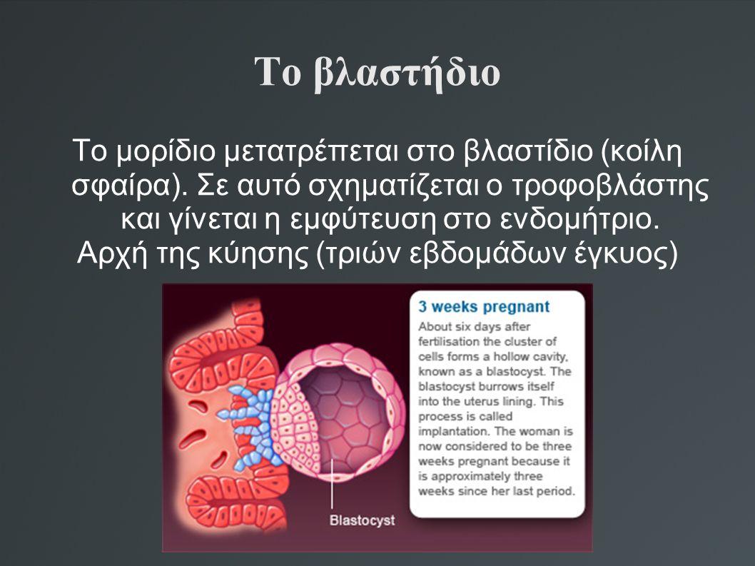 Αρχή της κύησης (τριών εβδομάδων έγκυος)
