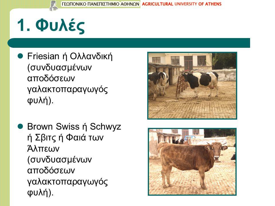 1. Φυλές Friesian ή Ολλανδική (συνδυασμένων αποδόσεων γαλακτοπαραγωγός φυλή).