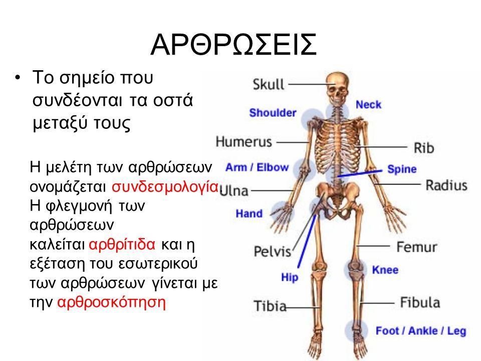ΑΡΘΡΩΣΕΙΣ Το σημείο που συνδέονται τα οστά μεταξύ τους