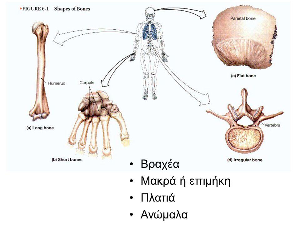 Βραχέα Μακρά ή επιμήκη Πλατιά Ανώμαλα Joints consist of the following: