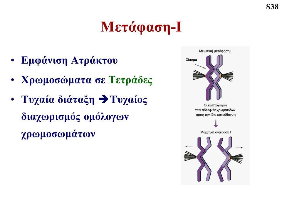 Μετάφαση-Ι Εμφάνιση Ατράκτου Χρωμοσώματα σε Τετράδες