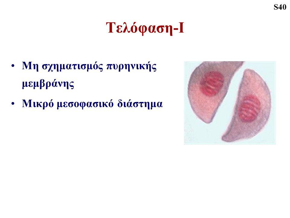 Τελόφαση-Ι Μη σχηματισμός πυρηνικής μεμβράνης