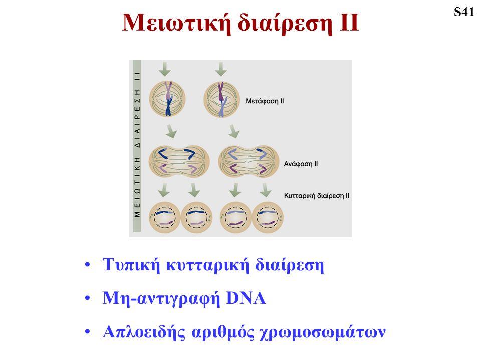 Μειωτική διαίρεση ΙΙ Τυπική κυτταρική διαίρεση Μη-αντιγραφή DNA