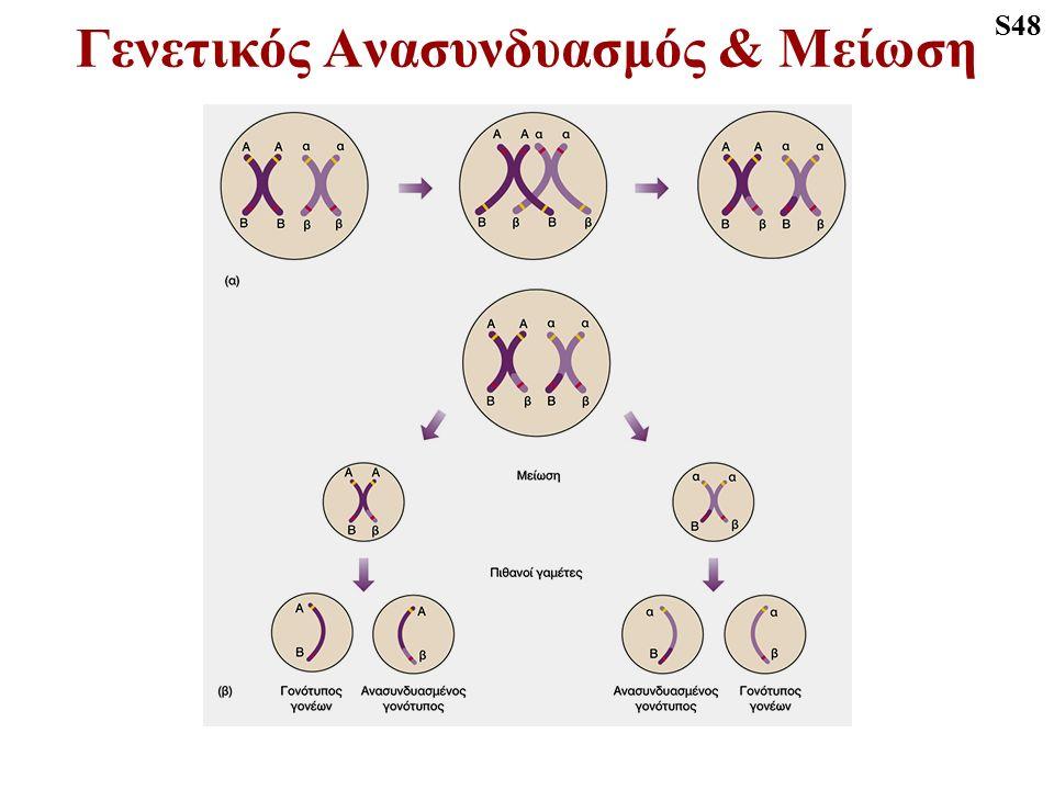Γενετικός Ανασυνδυασμός & Μείωση