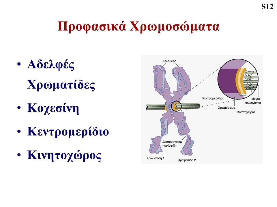 Προφασικά Χρωμοσώματα