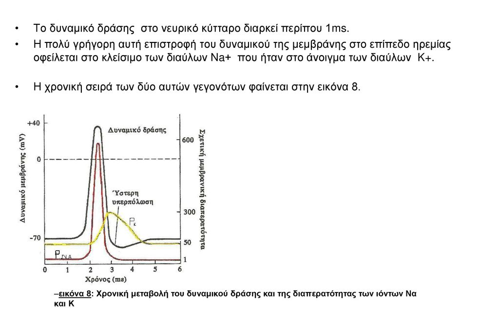 Το δυναμικό δράσης στο νευρικό κύτταρο διαρκεί περίπου 1ms.
