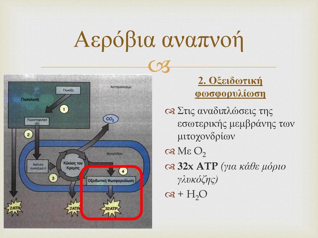 2. Οξειδωτική φωσφορυλίωση
