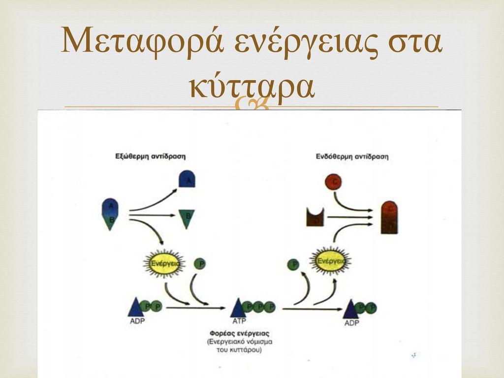 Μεταφορά ενέργειας στα κύτταρα