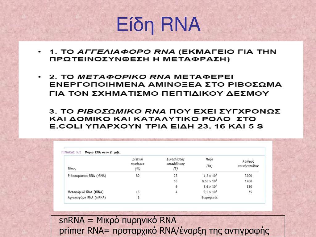 Είδη RNA snRNA = Μικρό πυρηνικό RNA