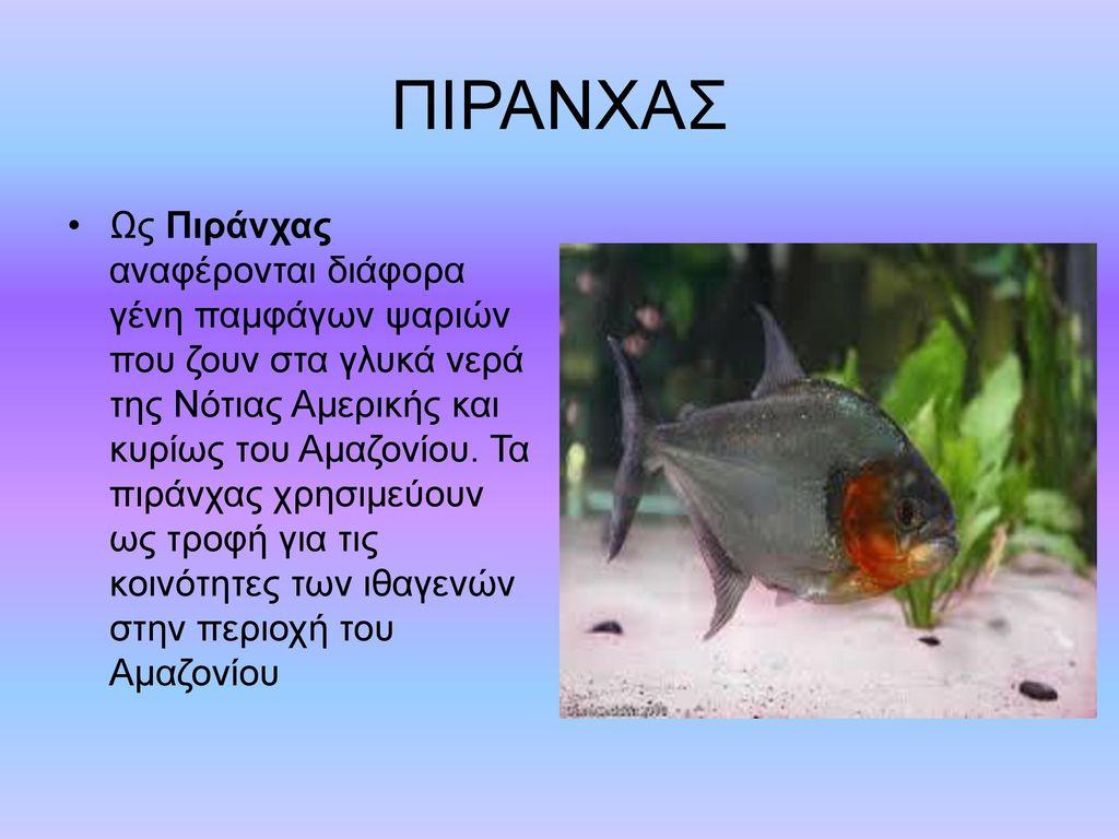 ΠΙΡΑΝΧΑΣ