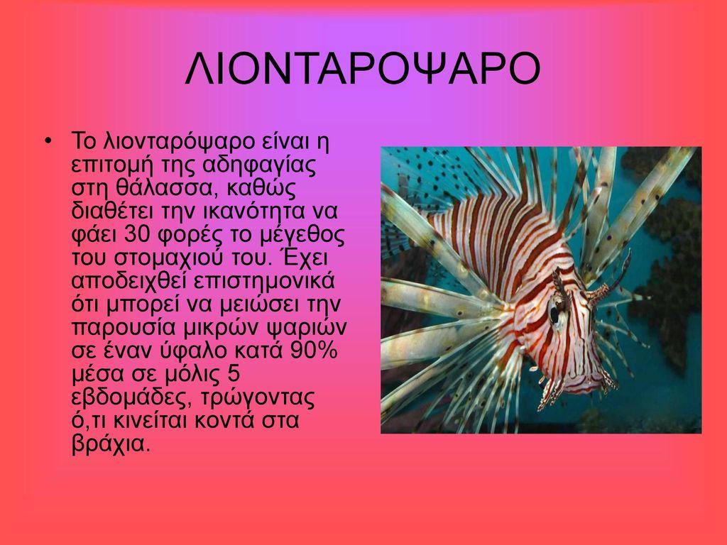 ΛΙΟΝΤΑΡΟΨΑΡΟ
