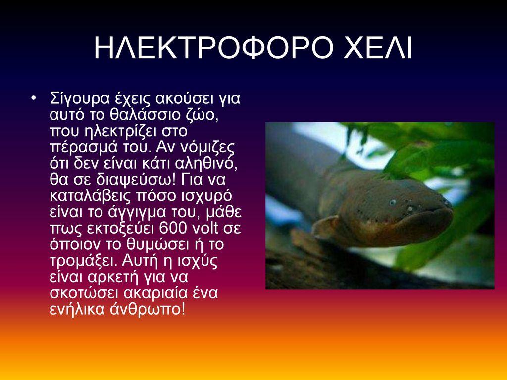 ΗΛΕΚΤΡΟΦΟΡΟ ΧΕΛΙ