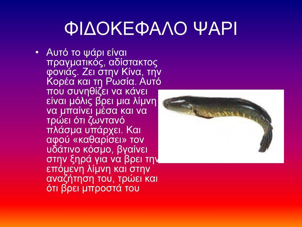 ΦΙΔΟΚΕΦΑΛΟ ΨΑΡΙ