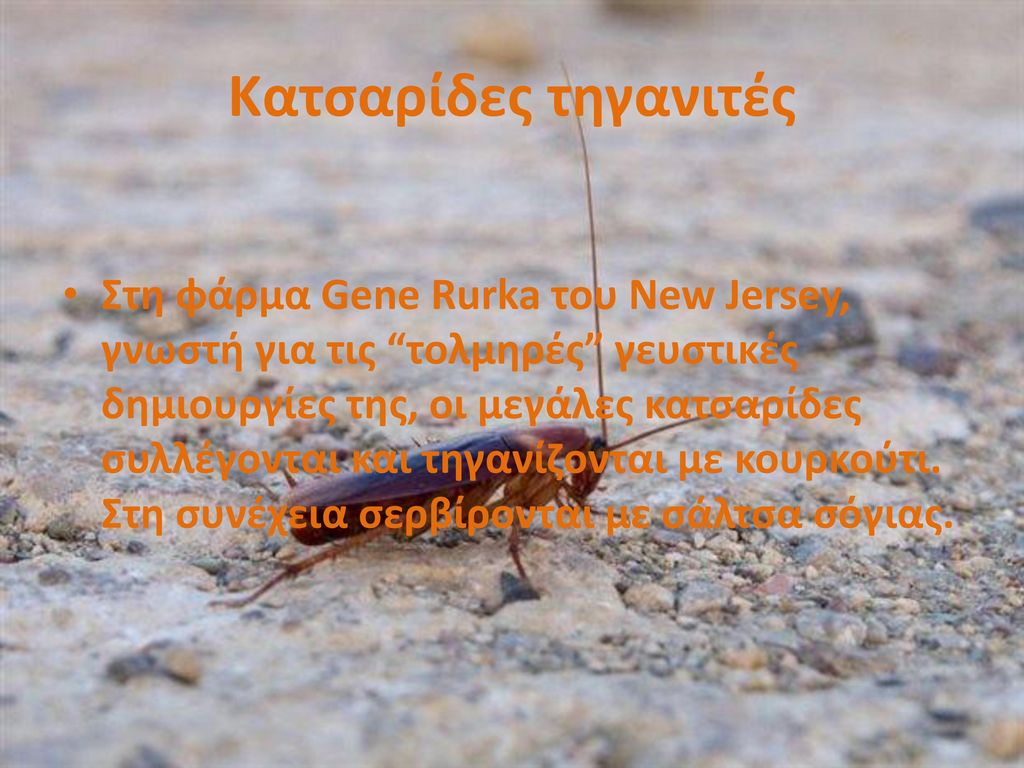 Κατσαρίδες τηγανιτές