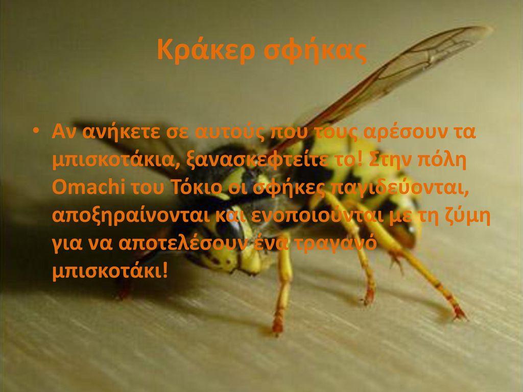 Κράκερ σφήκας