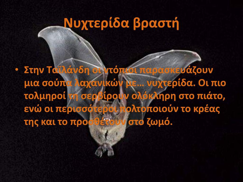 Νυχτερίδα βραστή