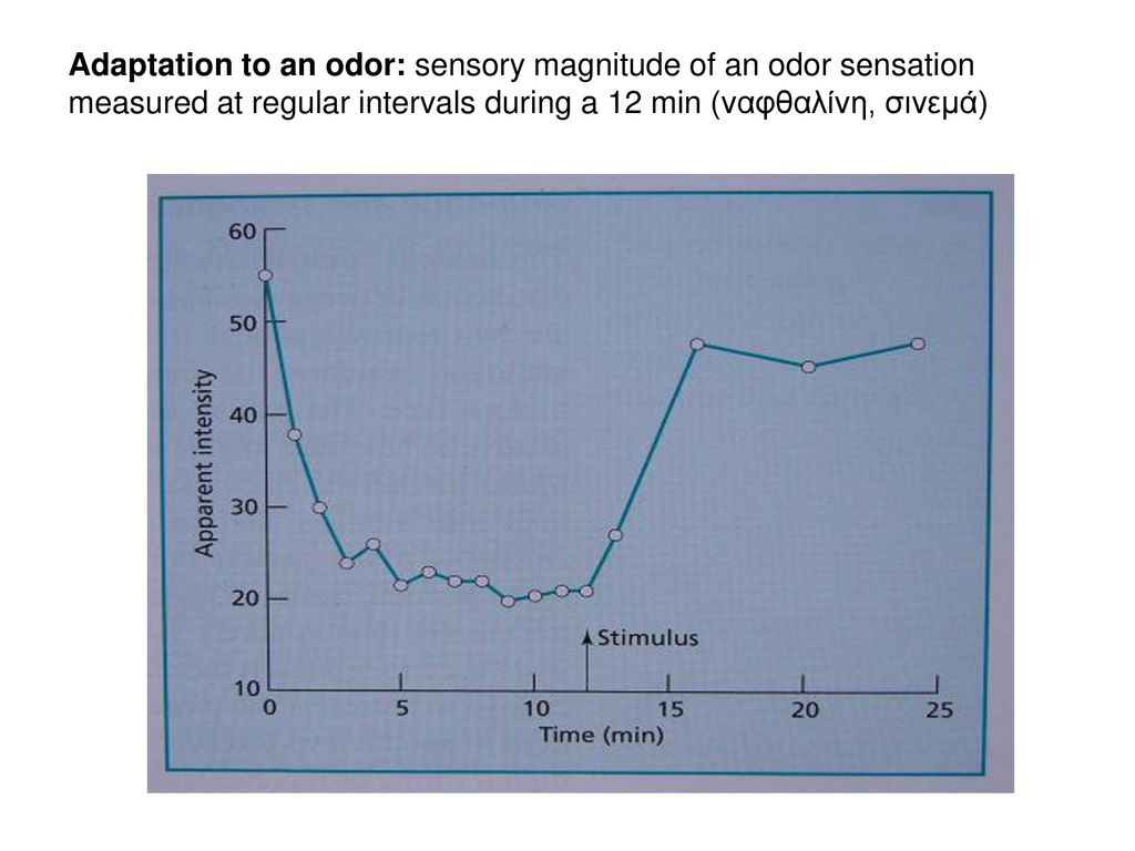 Adaptation to an odor: sensory magnitude of an odor sensation measured at regular intervals during a 12 min (ναφθαλίνη, σινεμά)